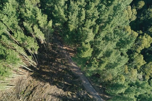 Pembukaan lahan hutan. UNSPLASH/Gryffyn M
