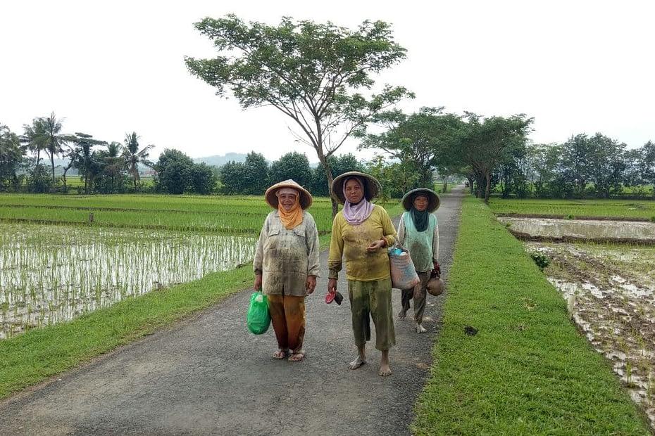 Sekelompok petani perempuan tengah berjalan di pinggir sawah Banyumas. LEBIHDALAM/ Rendy A. Diningrat